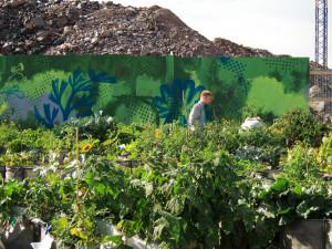 Kaupunkiviljelyä Suvilahdessa 2011